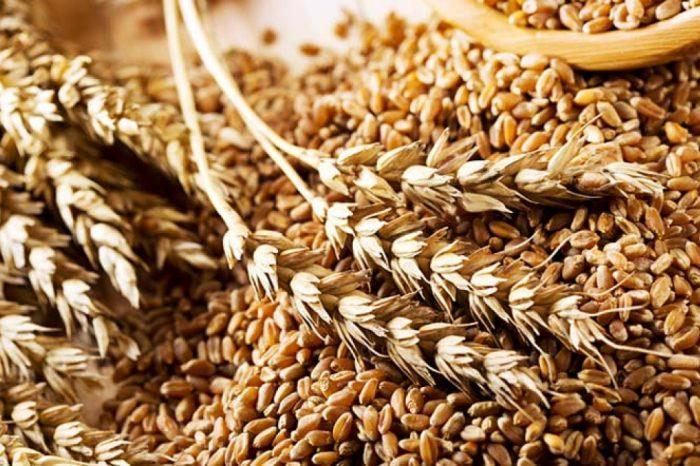 В хранилищах Украины сократились запасы зерновых