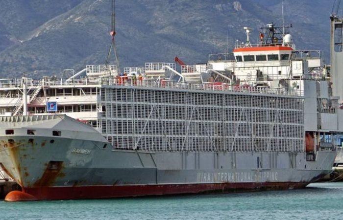 Пропало судно для перевозки животных с 43 членами экипажа на борту
