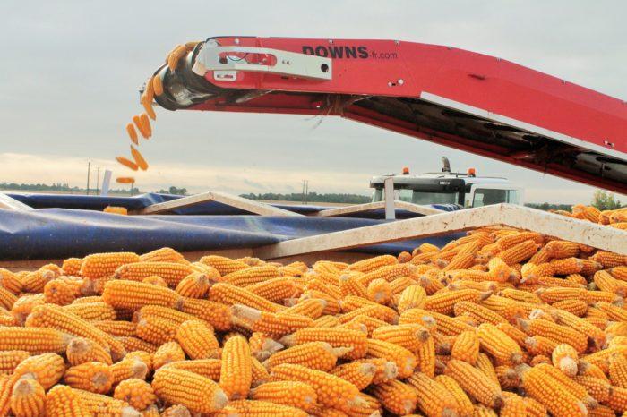 За три месяца на экспорт отгрузят половину запланированного годового объёма кукурузы