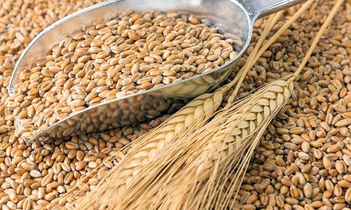 В Египте планируют увеличить импорт украинского зерна