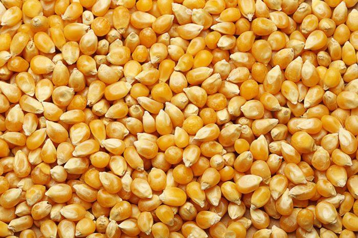 Фермеры остановили продажи украинской кукурузы