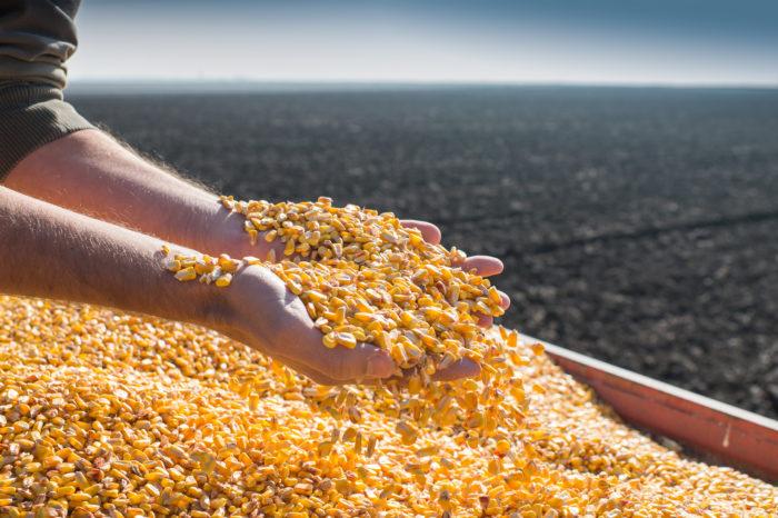 Минэкономики может ограничить экспорт украинской кукурузы