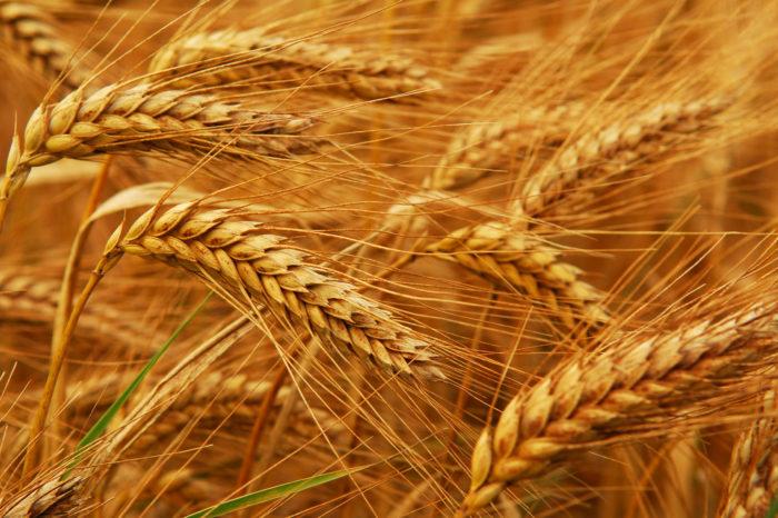 Цена украинской пшеницы на базисе FOB превысила максимум за 6 лет