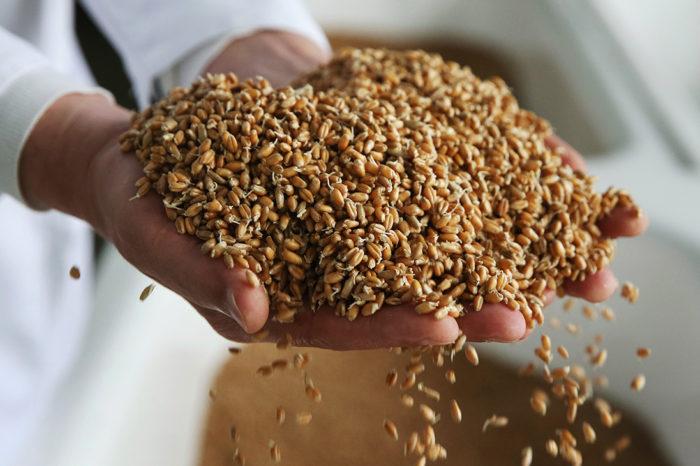 Экспорт украинского зерна превысил 29 млн тонн
