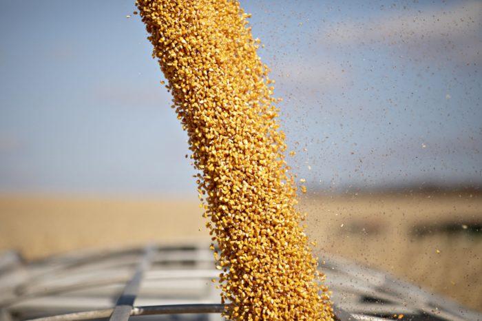 Госпродпотребслужба и УЗА займутся контролем качества экспортного зерна