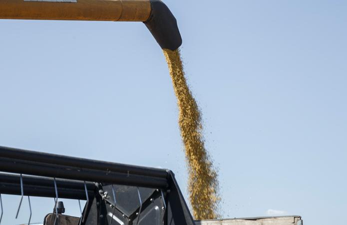 Прогнозируемый урожай зерна в Украине составит примерно 75 млн тонн
