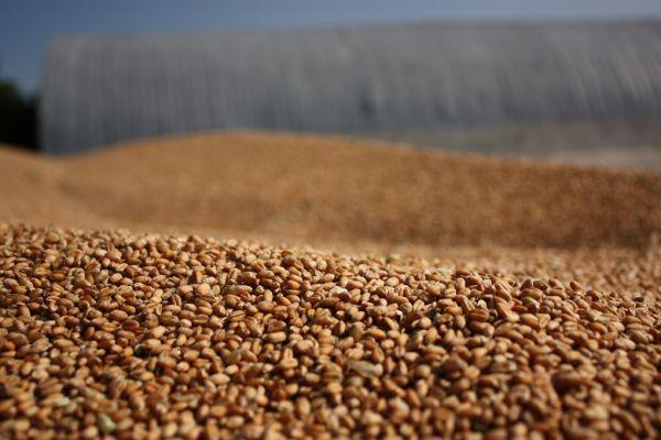 В Украине началась форвардная кампания на зерно урожая 2021 года
