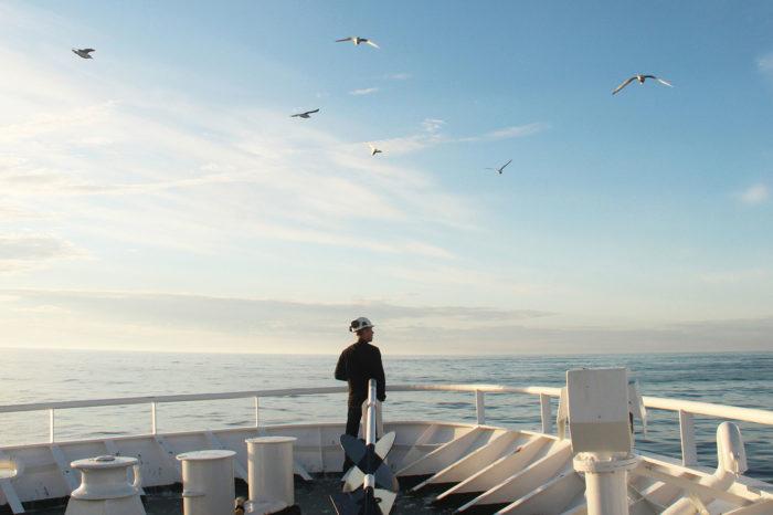 Фальшивые документы моряков: как избежать обмана
