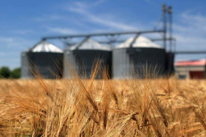 Экспорт пшеницы из Украины может быть ниже заявленного Меморандумом