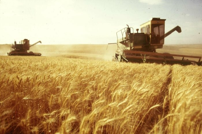 Projected yield and export potential: what is the Ukrainian grain market preparing for?