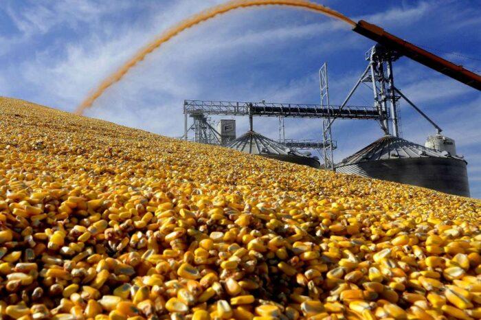 Форварды на зерно в этом сезоне могут быть выше будущих спотовых цен