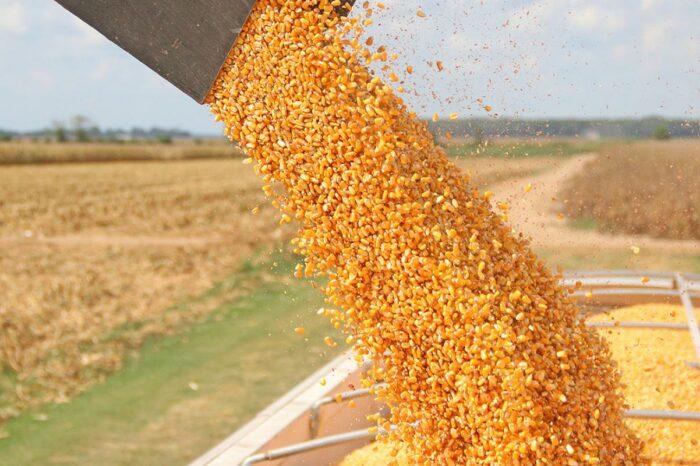 В портах Украины увеличились объемы перевалки кукурузы