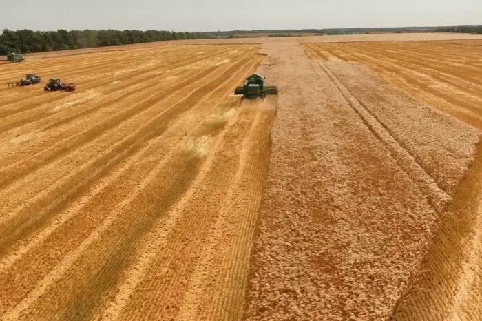 В этом году в Украине ожидают рекордный урожай