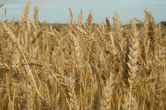 Почему Украина поставляет мало агропродукции в Восточную Африку, – мнение