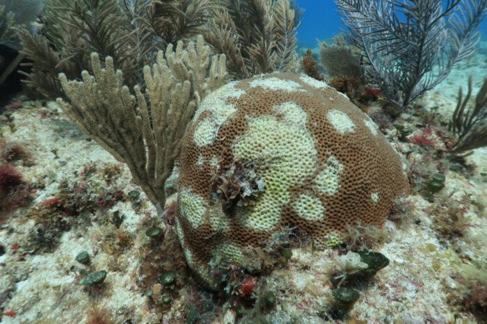 Судоходство могло спровоцировать коралловую болезнь, — ученые
