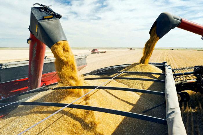 Турция закупила украинскую пшеницу нового урожая