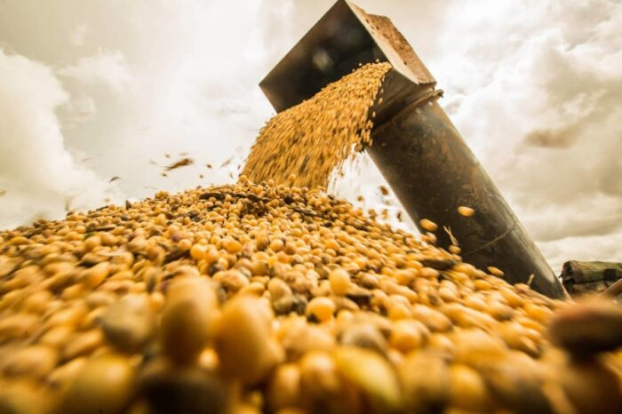 Экспорт украинской сои достиг минимума за последние семь лет