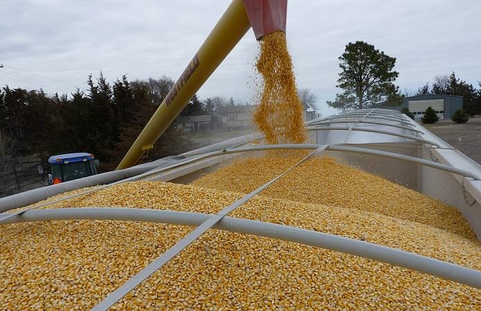 Экспорт украинской кукурузы может превысить 30 млн тонн