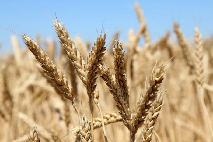 Экспорт зерна из Украины превысил 10 млн тонн