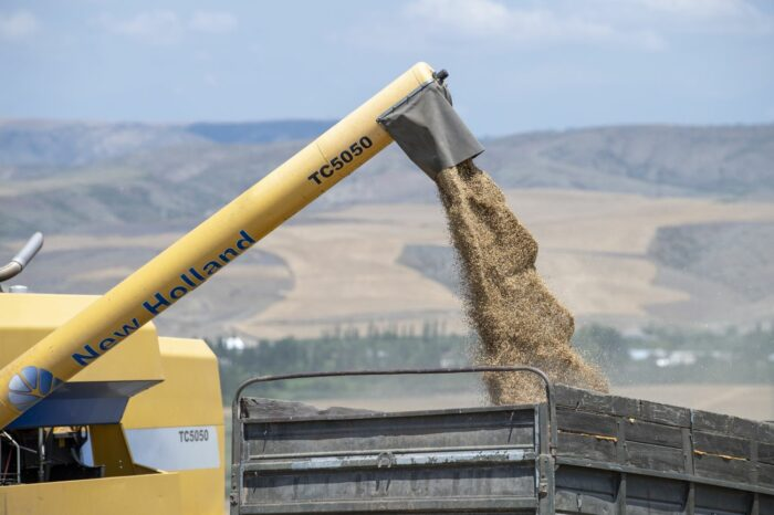 Рынок зерна: чего ждать от производителя?
